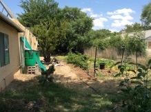 Kimchi Garden 2016-06-13