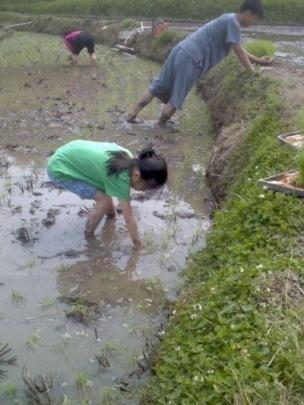 Rice Planting 2016-05-19