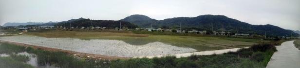 panorama rice field